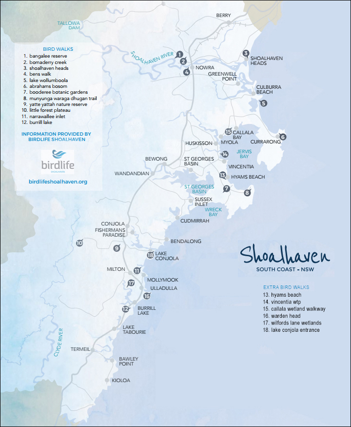 Shoalhaven Bird Walks