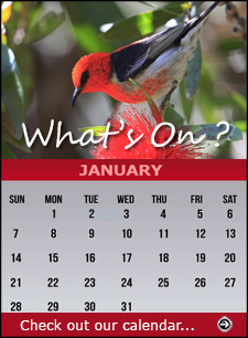 Click for our Calendar page